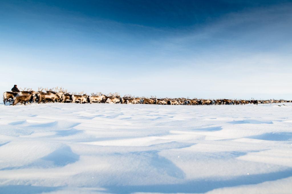 Bild från världsarvet Laponia